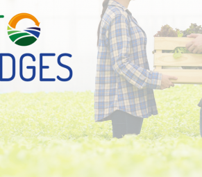 agrobridges proyecto mejora posicion agricultores cadena agroalimentaria